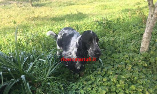Addestrare un cane da tartufo come Leyla