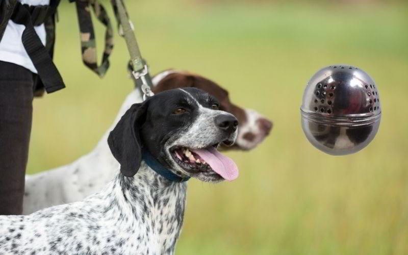 ovetto per addestramento cane da tartufo