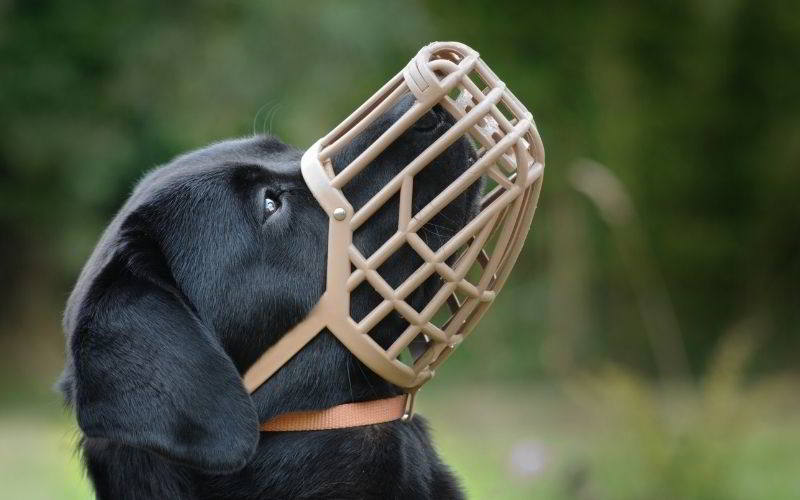 museruola per cani da tartufo